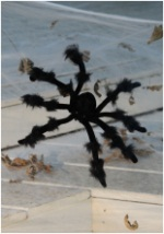 Poseable 20 Inch Black Spider