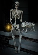 Life-Size Poseable Skeleton
