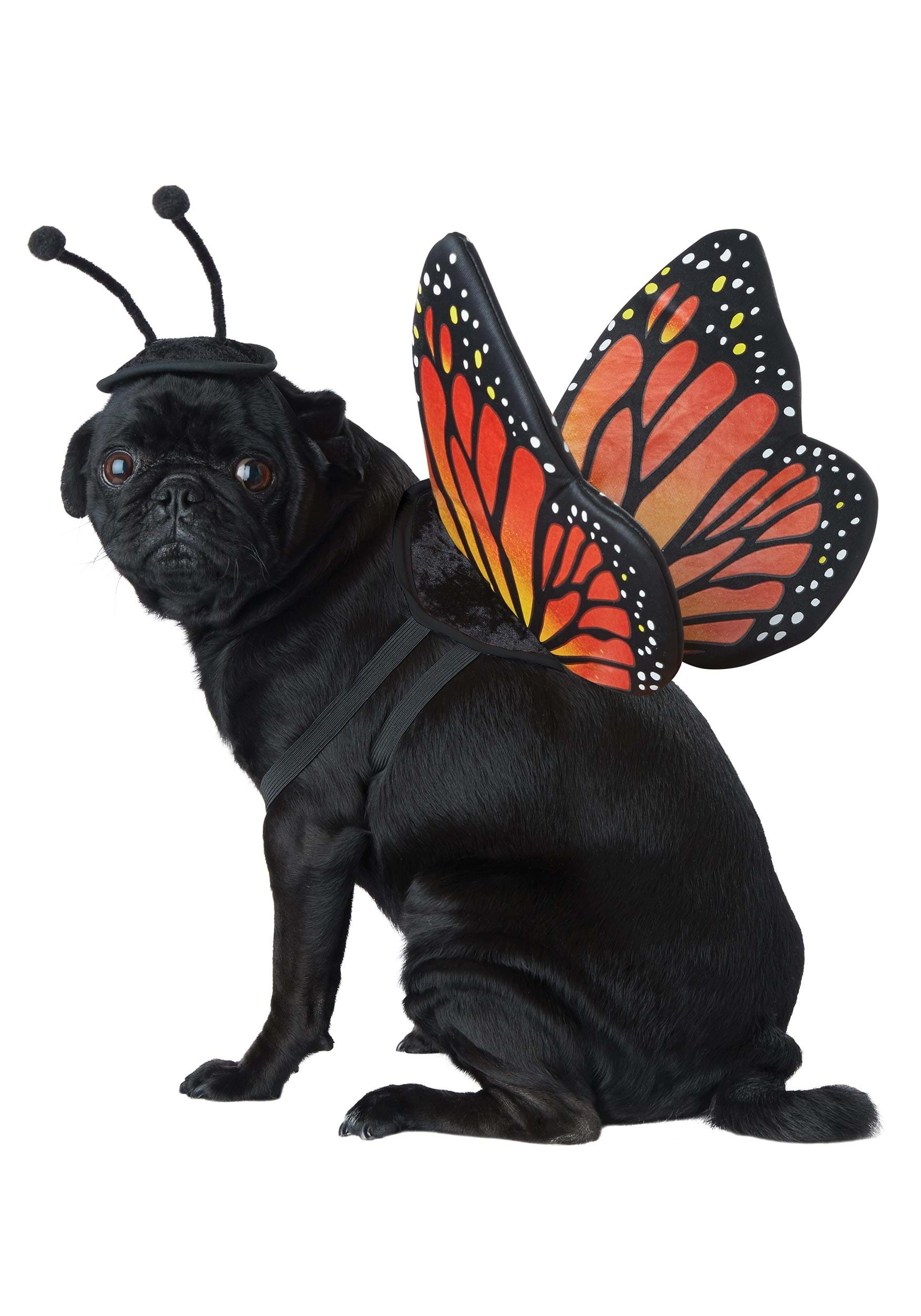 Dog Butterfly Costume  sc 1 st  Halloween Costume Ideas & Pet Halloween Costume Ideas - Cat and Dog Halloween Costume